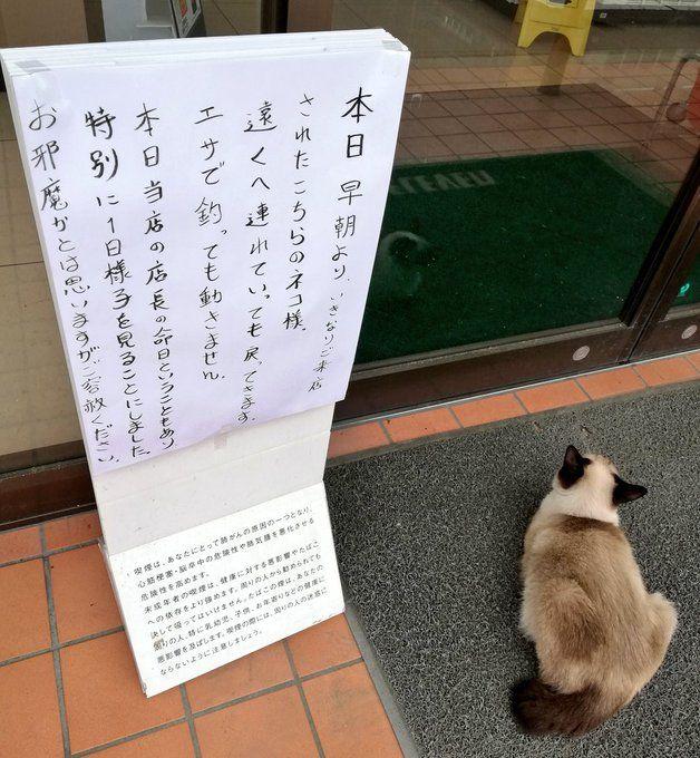 Un gato se niega a moverse de una tienda en el día del aniversario de la muerte del gerente